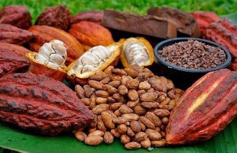 Cacao-Organico-salto-la-jarda-e1592090742620